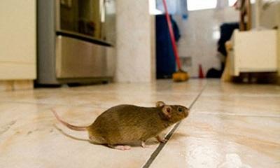 máy đuổi chuột 1