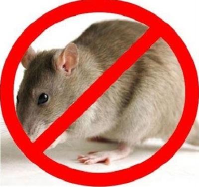 máy đuổi chuột