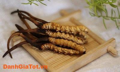 dong-trung-ha-thao-cordyceps-2